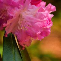 帰全山公園はシャクナゲやツツジが花盛り
