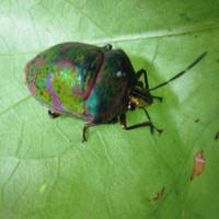 夏に公園で見かける虫達が これからも会える事を願うばかりです。(その1)