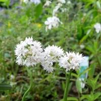 ストーリーのある花の写真