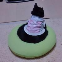 円座クッションと猫