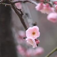 迷歩録  初春