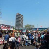 いよいよ 「泳げ鯉のぼり相模川」 が始まりました!!!