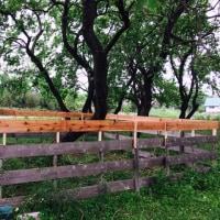 ヤギのバドック(運動場)のフェンスを高くしました