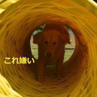 秋キャンプだWAN 最終編