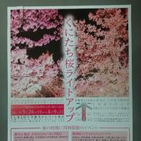 3月25日 本日は青柳若葉会でお花見をしました