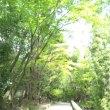 高田本山専修寺の蜥蜴