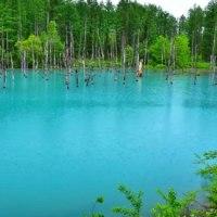 雨の白金 青い池