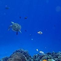 梅雨明けだね。 沖縄ダイビング 那覇シーマリン