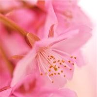 No.3802  桜color.