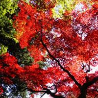 紅葉 (花 4124)