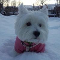 またまた雪が降りまして