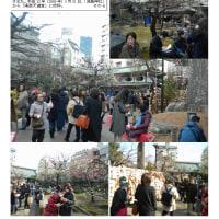 花巡り 「梅-158」  湯島天満宮