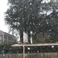 ふたたび春の雪
