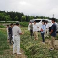 若手農業者を対象に「ねぎ現地検討会」を開催。
