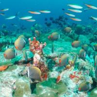 Khandhooma Thila , South Male Atoll, Maldives - カンドゥーマティラ、南マーレ環礁、モルディブ
