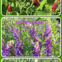 田んぼの花見