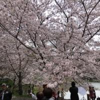 4月9日  鶴見緑地