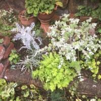 鉢植えの解体