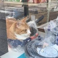 横浜伊勢佐木モール6丁目・西沢商店の招き猫、猫鍋再び!