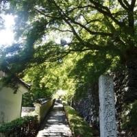 新緑の京都西山~♪