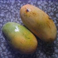 マンゴーの季節~終わり