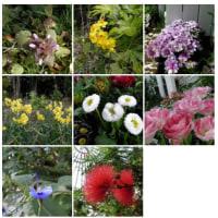 2011-02-27花の美術館