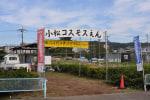 小松コスモス園