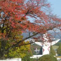 万博記念公園の紅葉**センニンソウの花とヒゲ