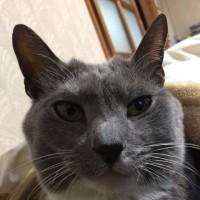 朝イチで猫のアップは嬉しい!