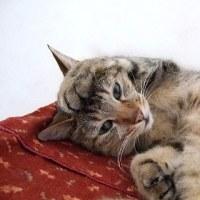 猫の洗顔と翌日の天気