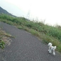 12歳☆しっかり歩く☆立派☆