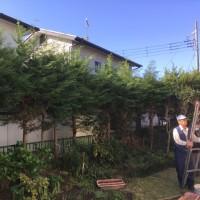 茨城 サッパリしました 庭木の刈り込みしました