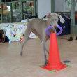 楽しめるのも日頃の練習があってこそ!!  犬のしつけ教室&犬の幼稚園@アロハドギー