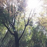 友と桜狩りライド