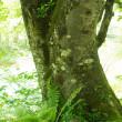 裏磐梯の樹々と遊ぶ(Ⅱ)