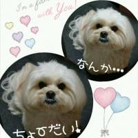もぉ~っ!Σ(×_×;)!