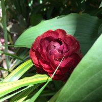 赤い花づくし