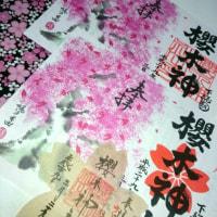 桜の。その8