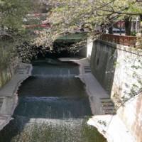 葉桜の目黒川を歩く