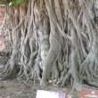 タイ、バンコク・アユタヤを訪れて