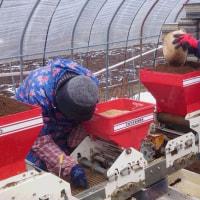 お米作り(籾蒔き)北海道沙流郡日高町千栄地区