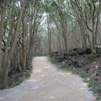 笠山・椿群生林