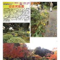 散策 「東京中心部北 345」 旧古河庭園