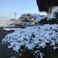 ついに来た…雪化粧