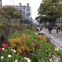 心地良いみどり   春が始まった横浜・関内