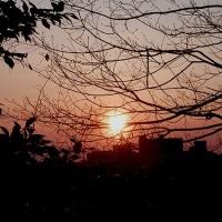 強風 靡く樹々 揺るぎない 真っ赤な陽
