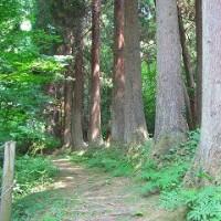 静かな頼成の森