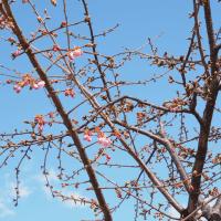 桜の開花情報は時事ネタかな…