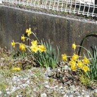 軽井沢のいろいろ 軽井沢に春風吹けば・・・