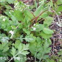 3/24春の始まりはじまり〜4